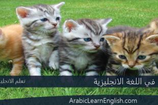 الحيوانات في اللغة الانجليزية